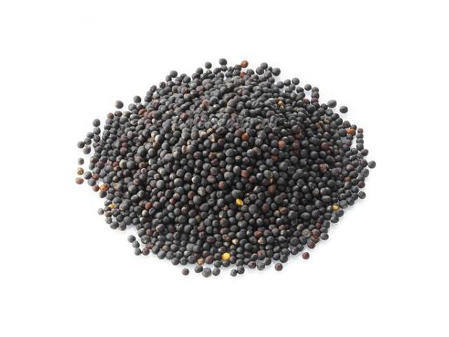 Купим рапс (масло семена) 1сорт ДОРОГО!!!