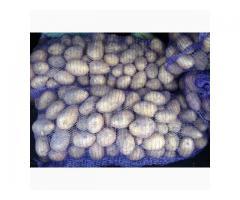Картофель Коломбо + семенной 10т