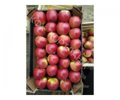 Продаем яблоки сортов: Принц, Глостер