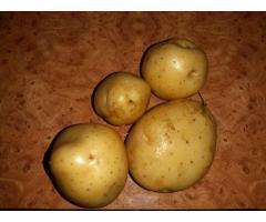Голландсие сорта картофеля, можно под мойку