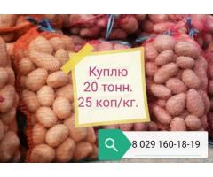 Куплю 20 тонн продовольственного картофеля, калибр 5+, сетевого качества, цена 0.25 руб