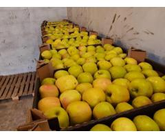 Продам яблоки 2 сорт, с наличие есть cорта: Голден, Грушевое, Найдаред, Глостер, Лиголь