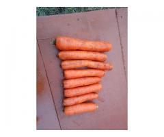 продажа моркови